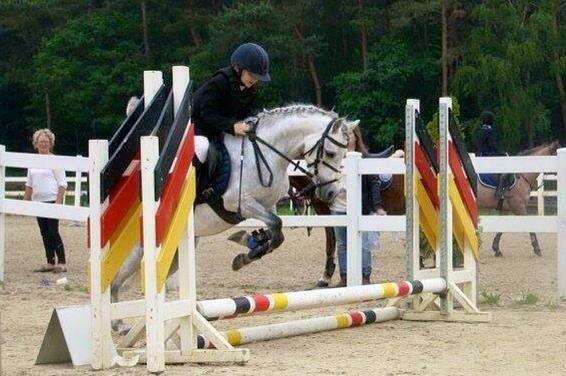 Fantastische leuke 4 jarige B pony schimmel ruin!
