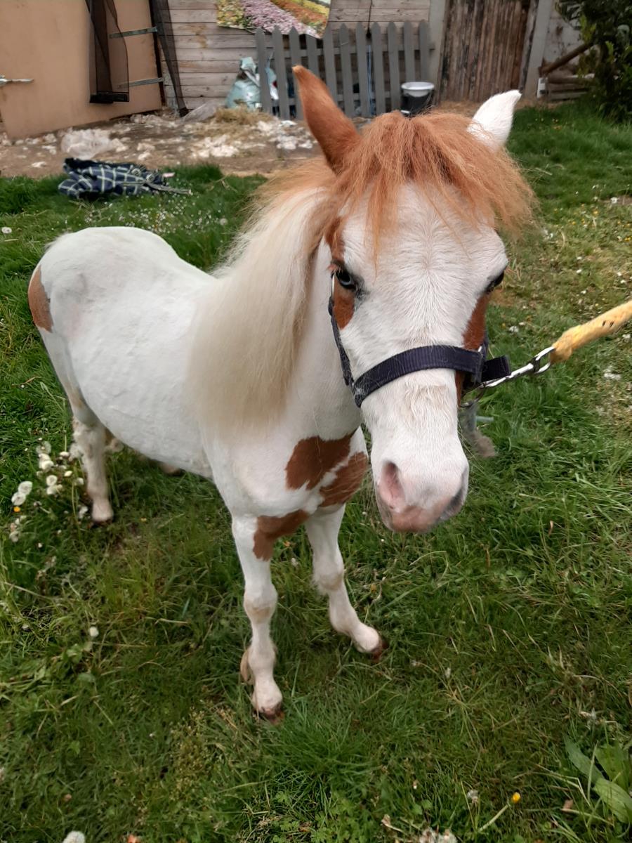 Mooi mini paardje NMPRS