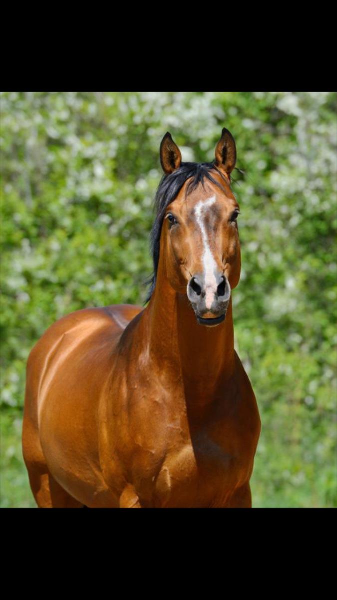 Paard/pony gezocht