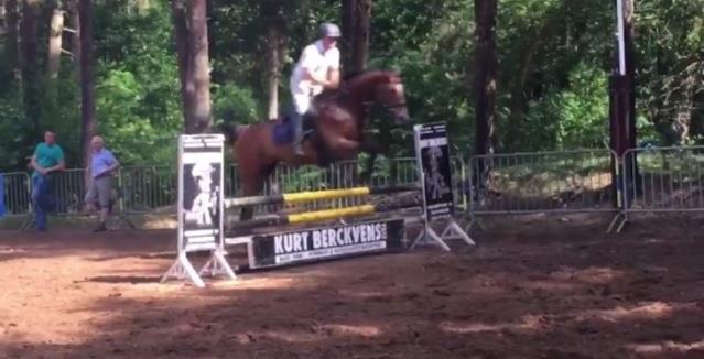 Fijn spring/recreatiepaard