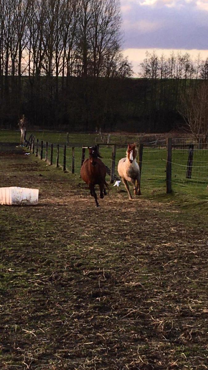 Pony/paardje te koop