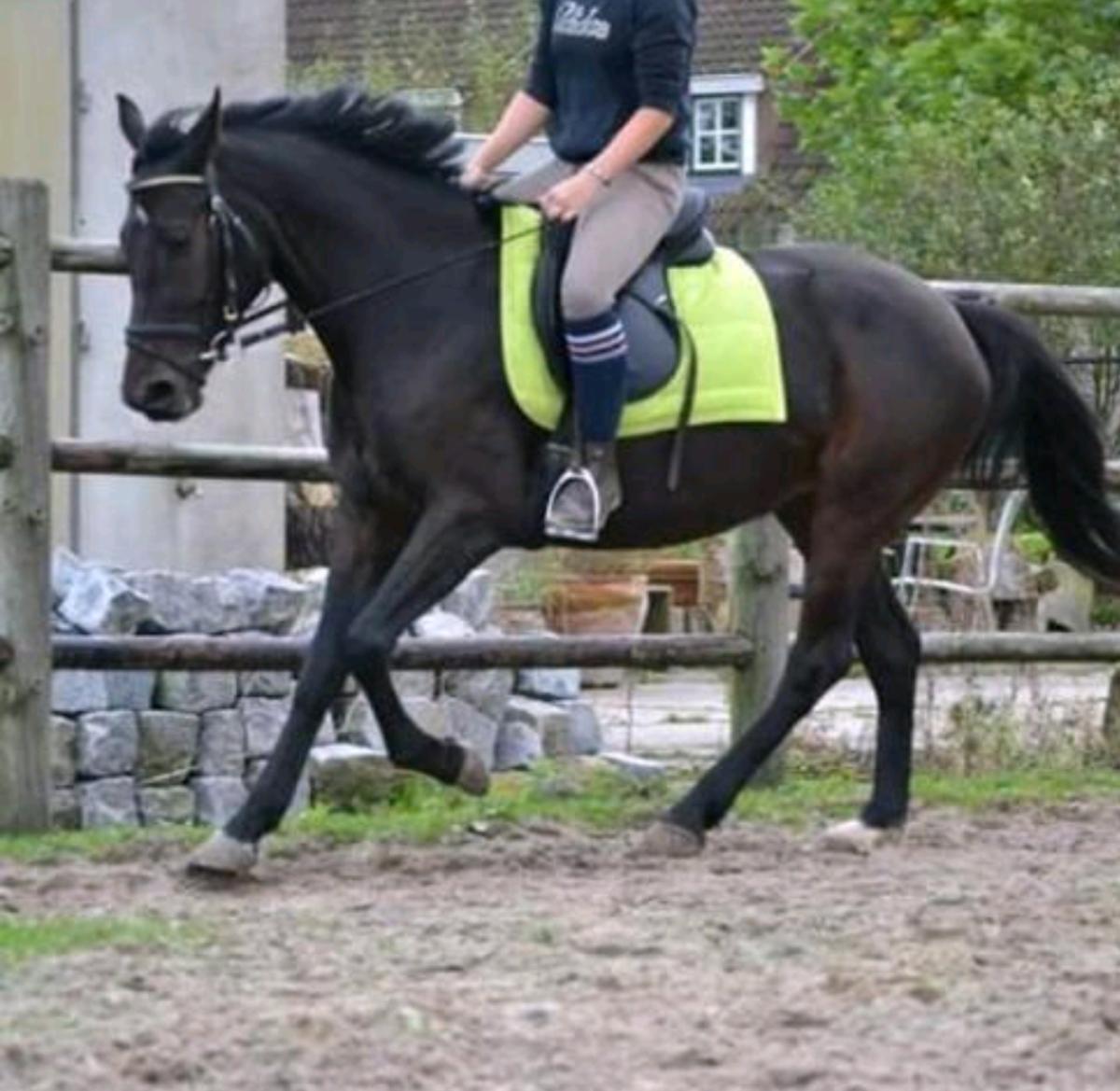 Lieve 5 Jarige NRPS Paardje/ E-pony te koop