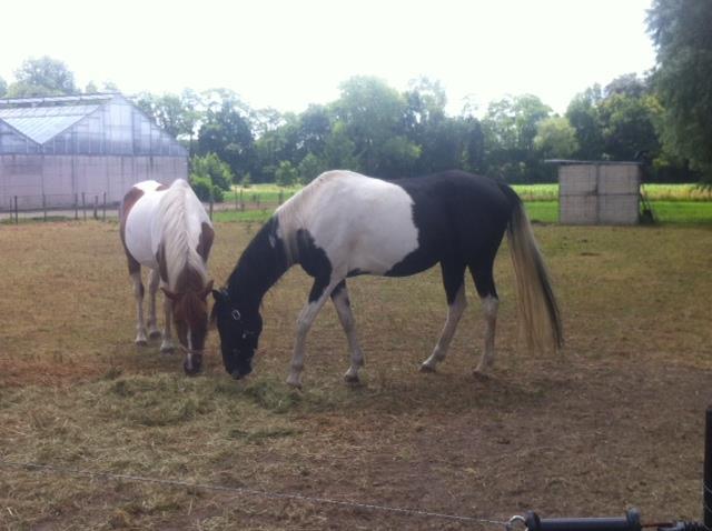 2 bonte paarden