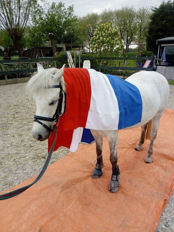 Mooie allround sport pony