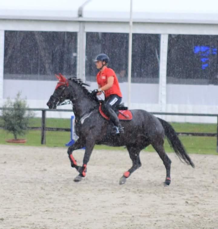 vimea z spring paard