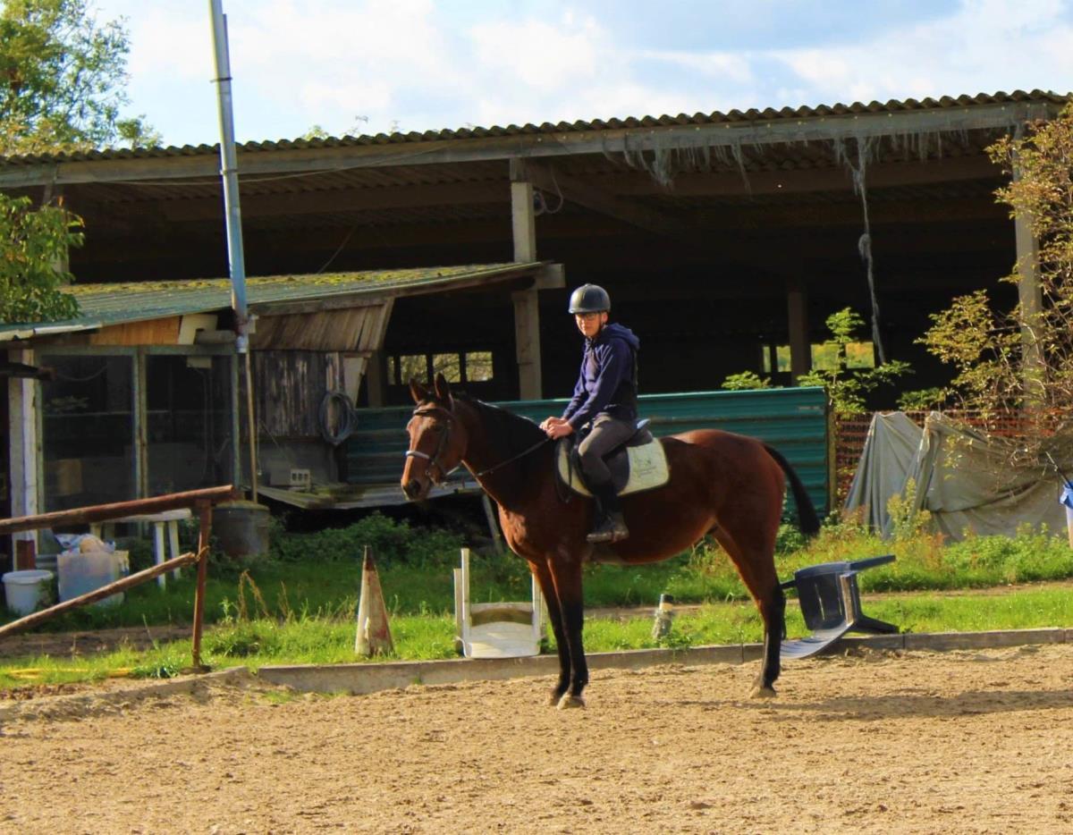 Recreatiepaard met stamboom