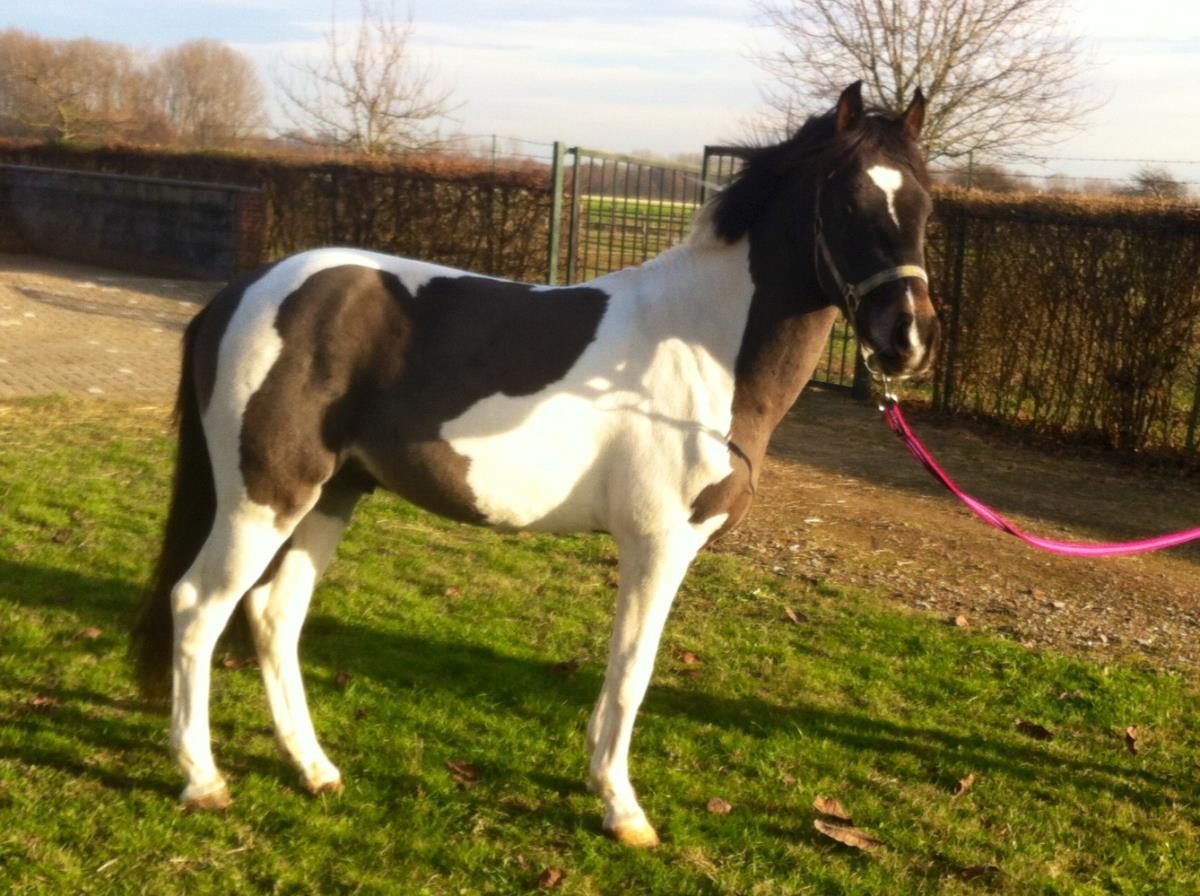 Fantastische blikvanger C pony!!