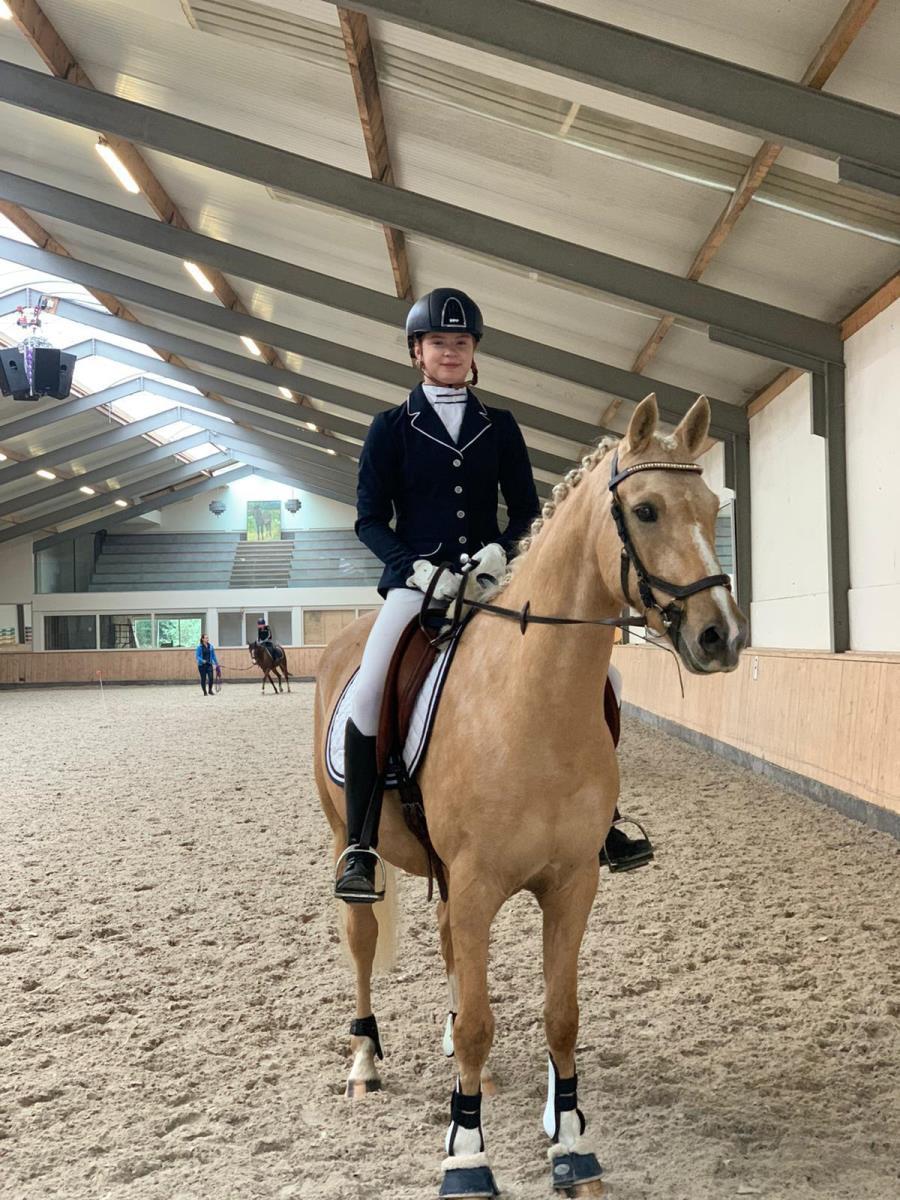 Palomino e pony ruin  9 jaar