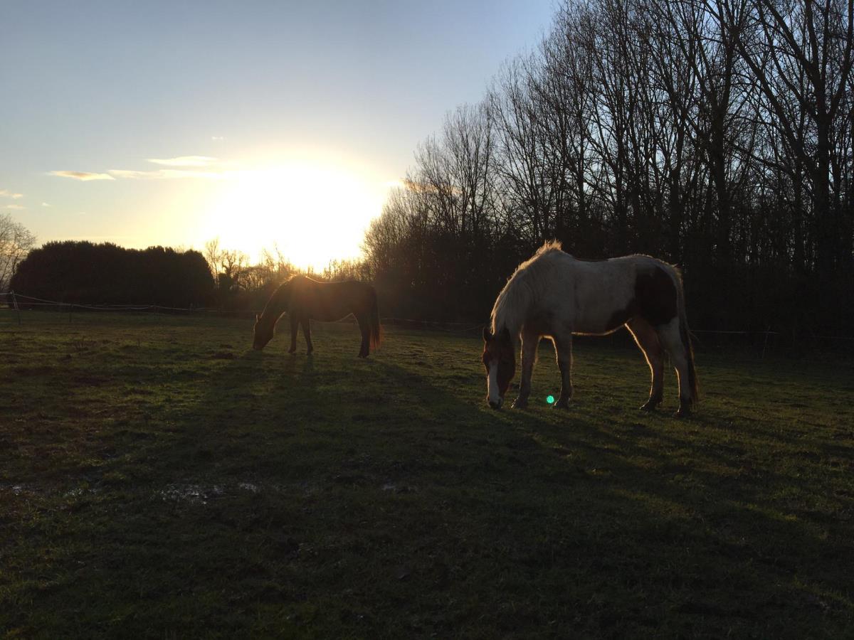 Leuke pony paardje
