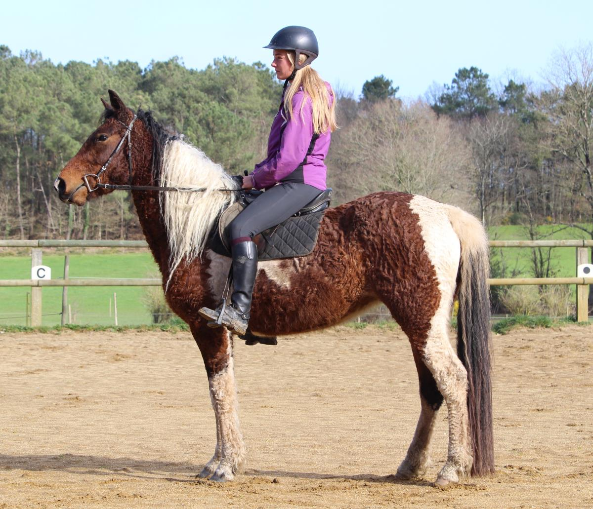 CURLY HORSE MARE - Kaila smart of JAK