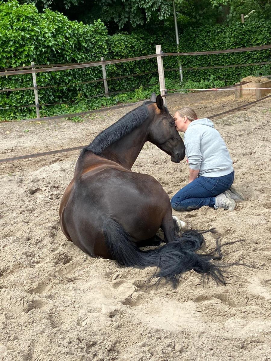 Paarden met trauma!