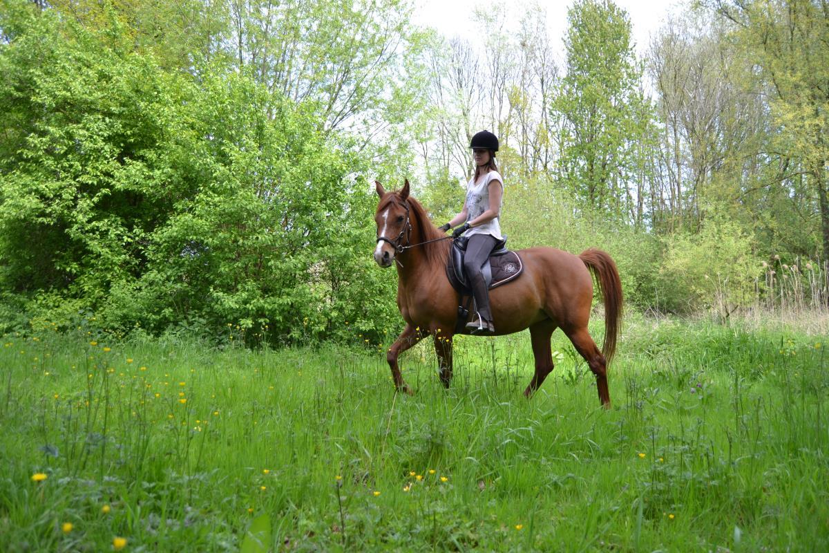Halve stal gezocht voor lieve karaktervolle merrie
