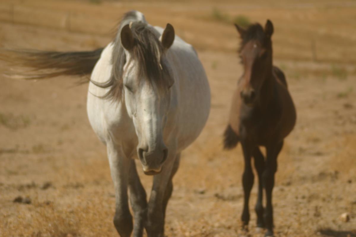 Adoptie paaden Roos en zoon Stunner