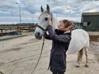 Paarden osteopaat